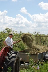 Roger making hay 2009