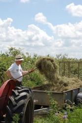 Roger making hay 2009